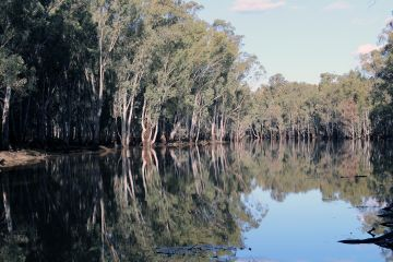 Gunbower forest flooding