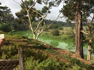Lower Werribee River with blue-green algal bloom before environmental watering on 11 March 2016