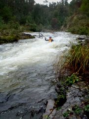 Canoeing on an environmental water release in the Thomson River, by Jolyon Taylor