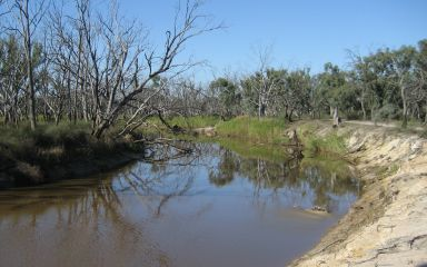 Wimmera River at Jeparit 2011
