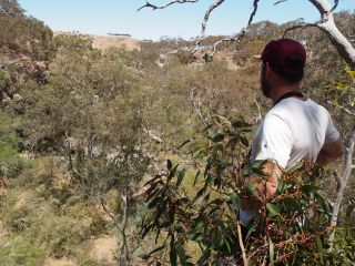 Healthy plants in the Moorabool River gorge, by Chloe Wiesenfeld