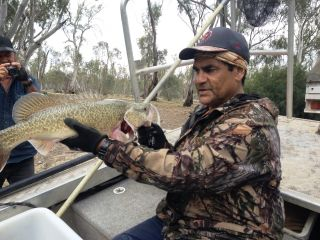 Murray cod, Dixie Patten, Gunbower Creek, by North Central CMA