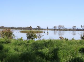 Lower Latrobe Wetlands