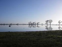 News Image - Billabong Morning Scene