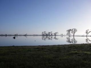 News Image - Billabong Morning Scene